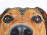 Vets debunk 13 myths about dogs   60 Plus Club